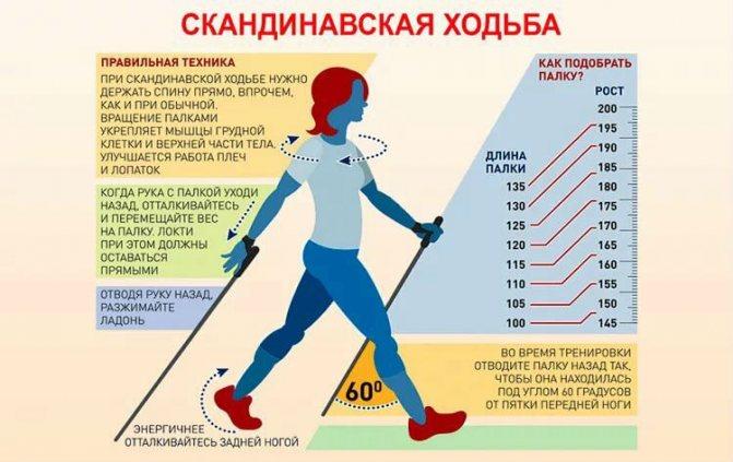 Скандинавская ходьба для начинающих и для похудения: как и сколько ходить, чтобы похудеть
