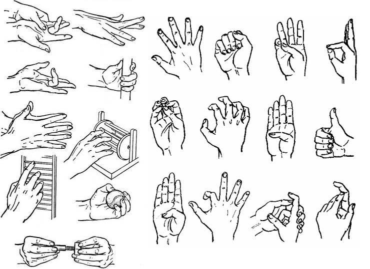 Как накачать кисти и пальцы рук: 14 лучших упражнений