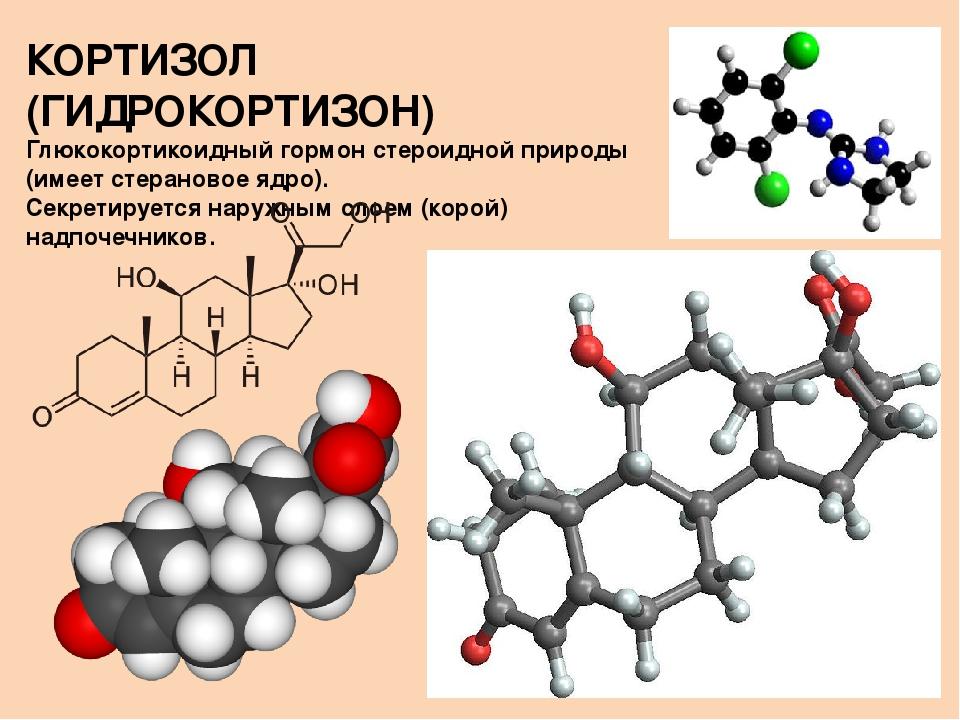 Гормон кортизол: за что отвечает, как снизить уровень в организме