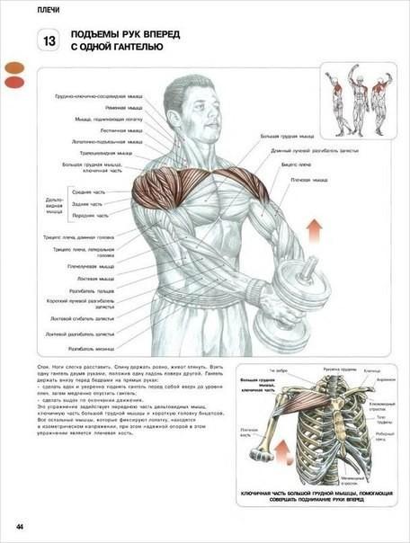 Лучшие упражнения на плечи —как правильно качать дельты?