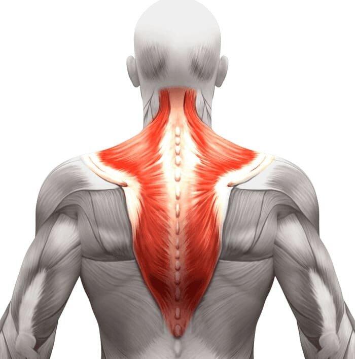 Растяжка спины и позвоночника: выполнение упражнений в домашних условиях