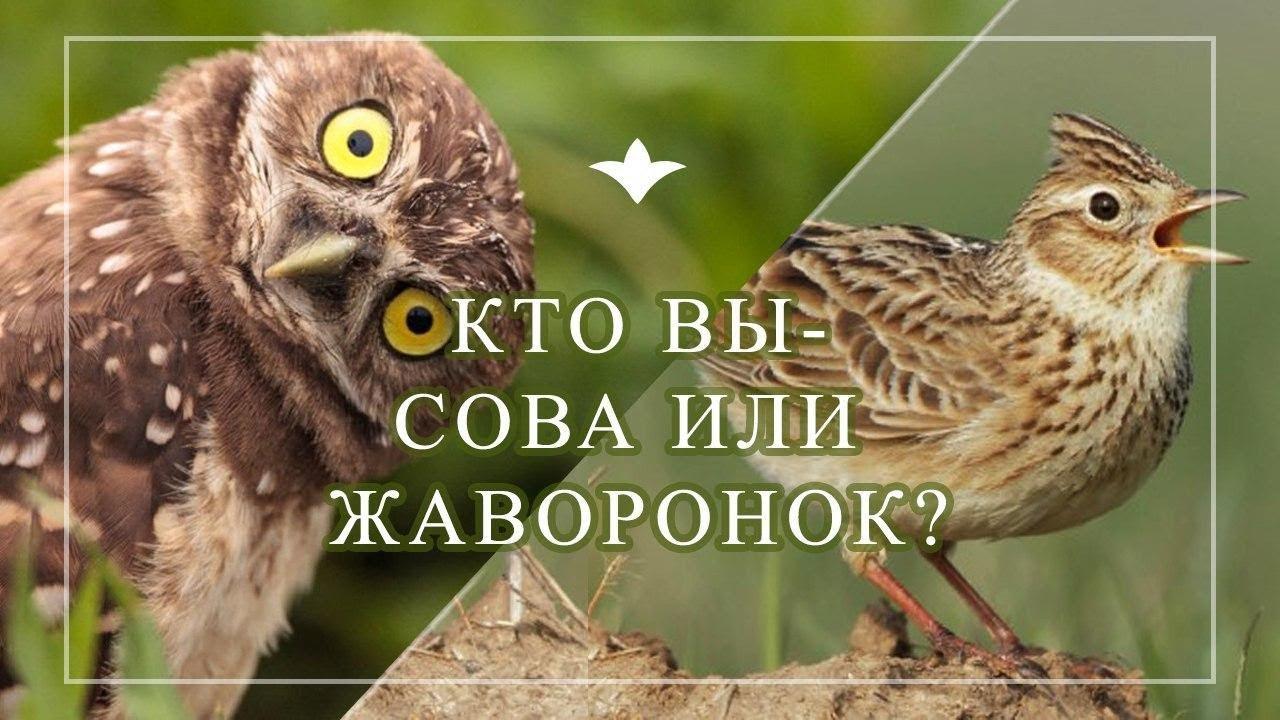 Ученые рассказали, как за три недели из «совы» превратиться в «жаворонка»