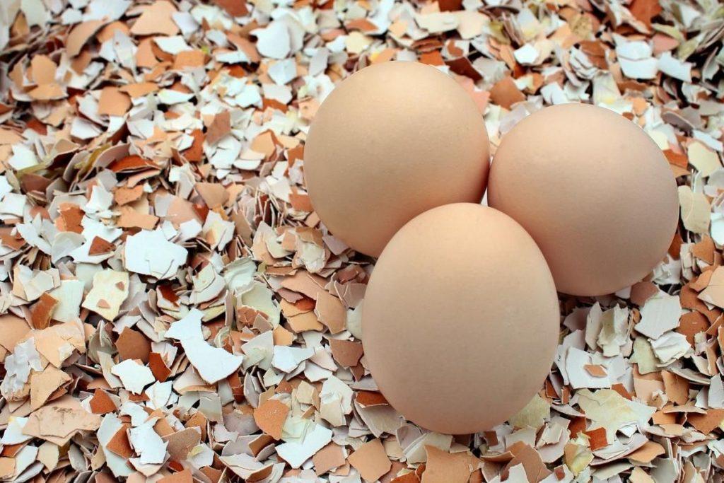 Из чего состоит яичная скорлупа: состав. яичная скорлупа, порошок из яичной скорлупы в пищу, для суставов, при переломах, для лица, для комнатных цветов, в саду и огороде: польза