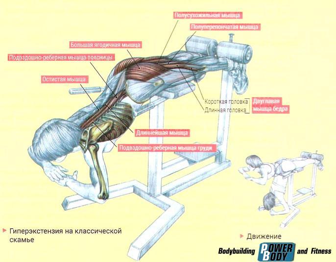 Обратная гиперэкстензия: базовое упражнение для тренировки бицепса бедра, ягодиц и длинных мышц спины, техника выполнения и практические рекомендации по выполнению обратной гиперэкстензии