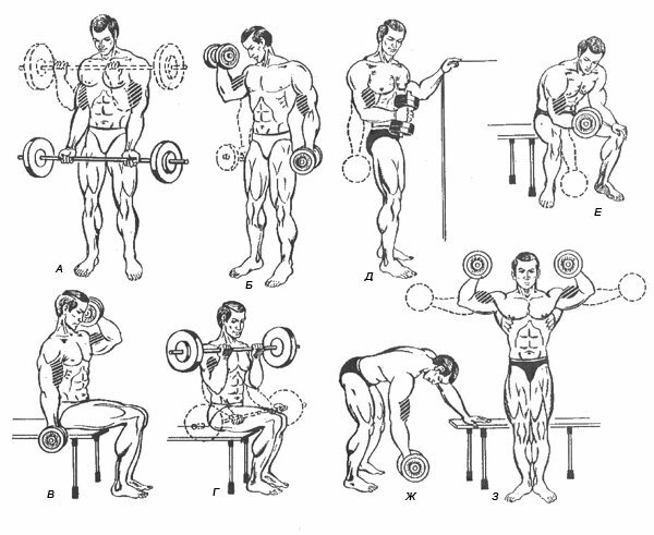 Как накачать грудь и плечи: эффективная программа дома