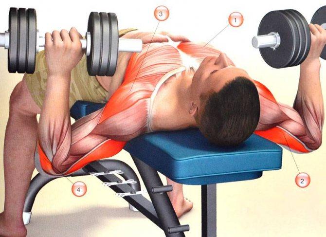 Упражнения на грудь в домашних условиях мужчинам