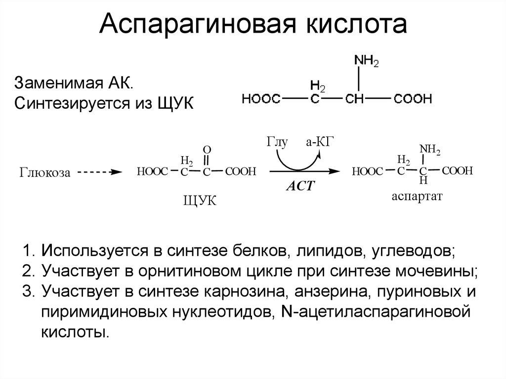 D-аспарагиновая кислота (daa) - dailyfit