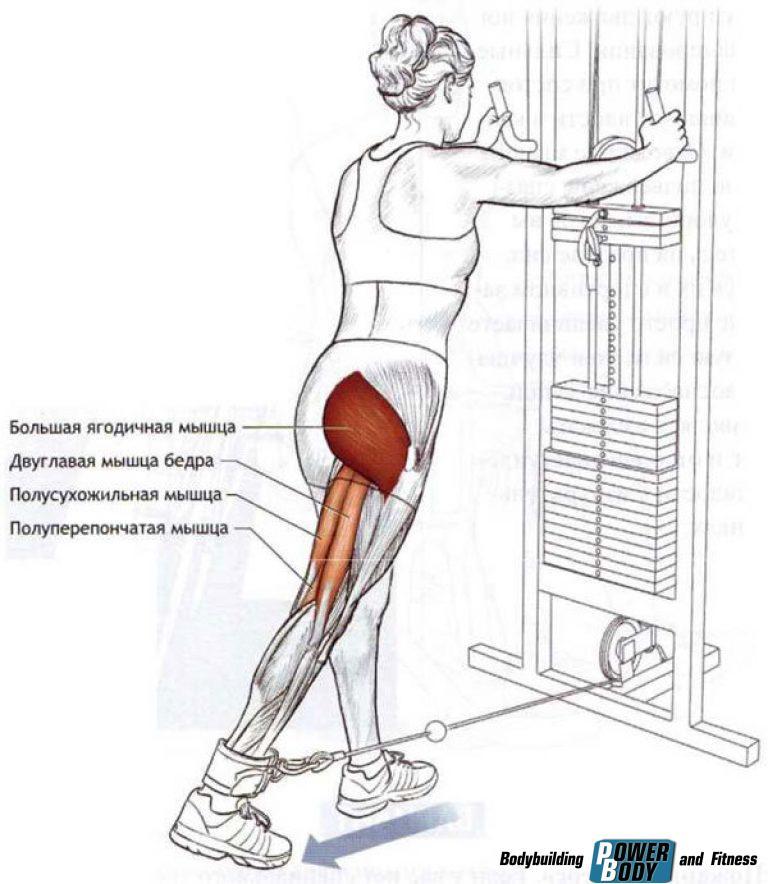 Упражнения для тренировки на ноги и ягодицы, которые необходимо выполнять в тренажерном зале девушкам