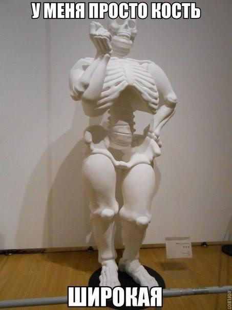 Сколько костей в руке человека? разбираемся вместе. сколько весит скелет человека - в клинике