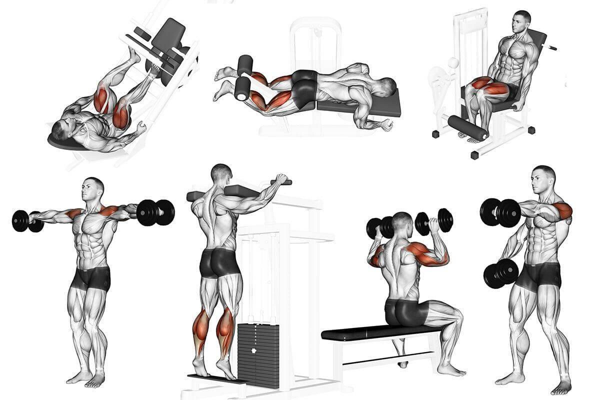 Мышцы крылья на спине: как накачать, какие упражнения нужны для мужчин в домашних условиях и спортивном зале
