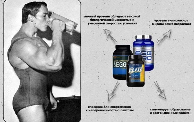 Особенности яичного протеина — плюсы и минусы — sportfito — сайт о спорте и здоровом образе жизни
