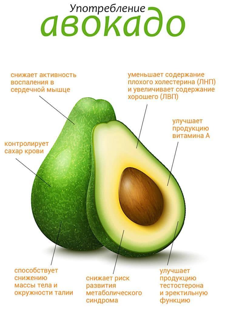20 полезных свойств авокадо для здоровья