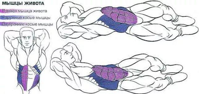 Как накачать боковые мышцы пресса в домашних условиях девушке