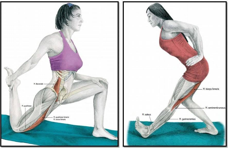 Растяжение мышц. симптомы, лечение. - здоровье прежде всего!
