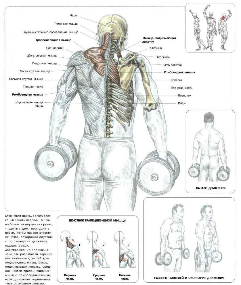 Тяга гантели из-за головы — пошаговая техника выполнения, подбор веса и варианты проработки различных мышц (85 фото)