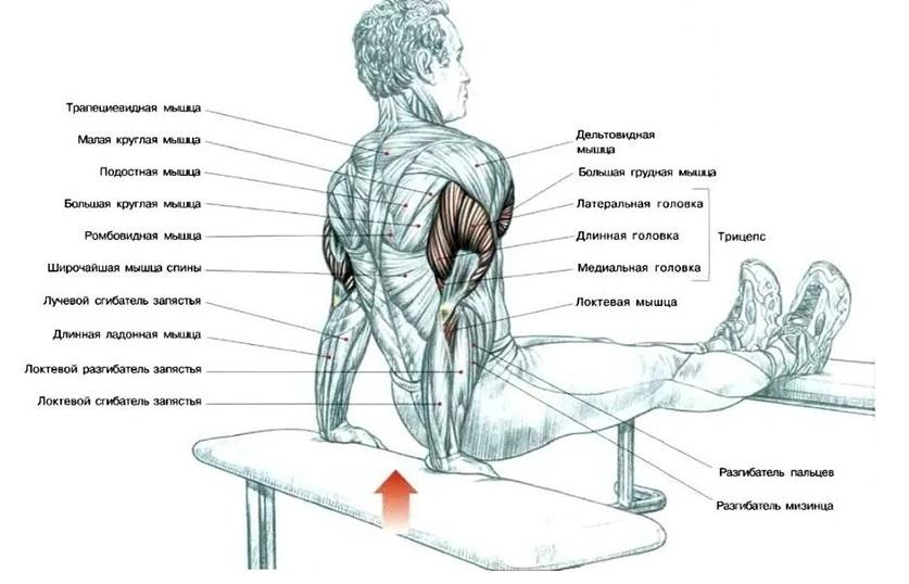 Отжимания узким хватом: виды упражнения и техника исполнения   rulebody.ru — правила тела