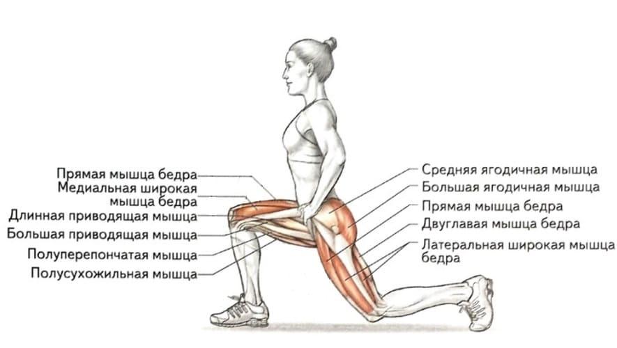 Упражнение для ног ножницы на какую группу мышц действует