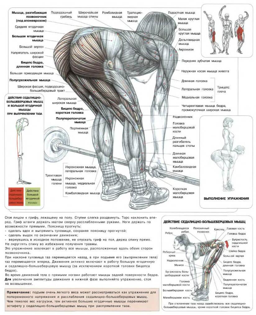 Румынская становая тяга — sportfito — сайт о спорте и здоровом образе жизни