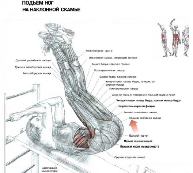 Как сделать мышцы эластичными.энциклопедия тренажёрного зала. |