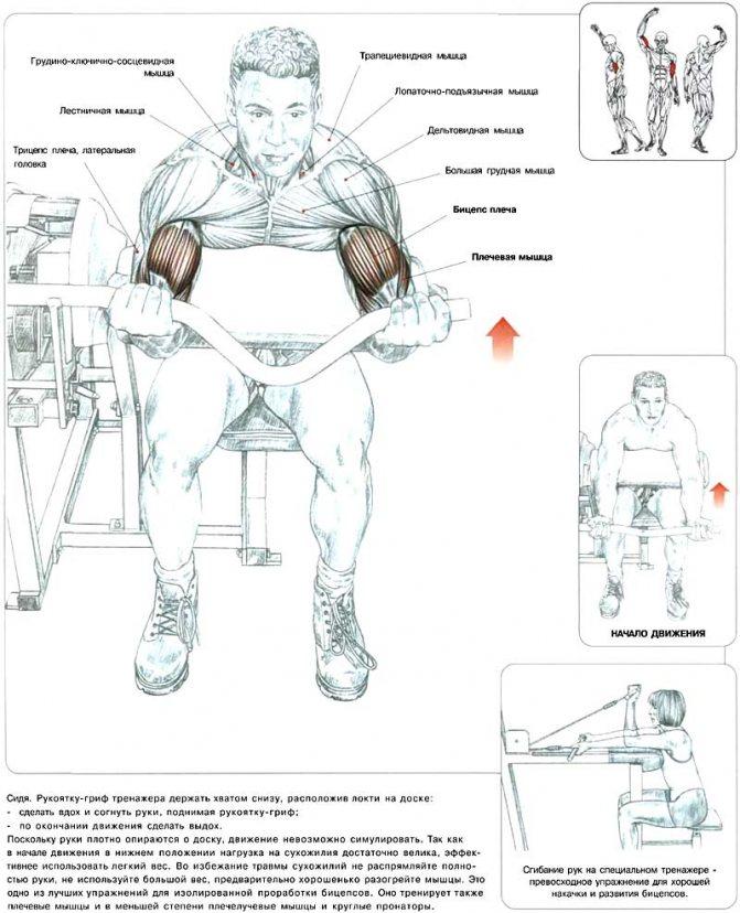 Упражнения для укрепления мышц в домашних условиях: лучший комплекс для выполнения новичкам (инструкция с фото и видео)