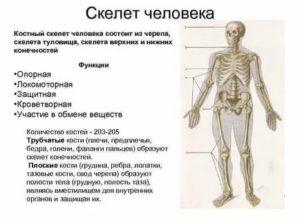 Почему у людей разные по весу кости