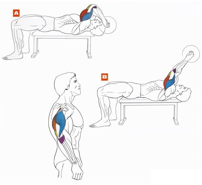 Как накачать трицепс - упражнения и схемы тренировок
