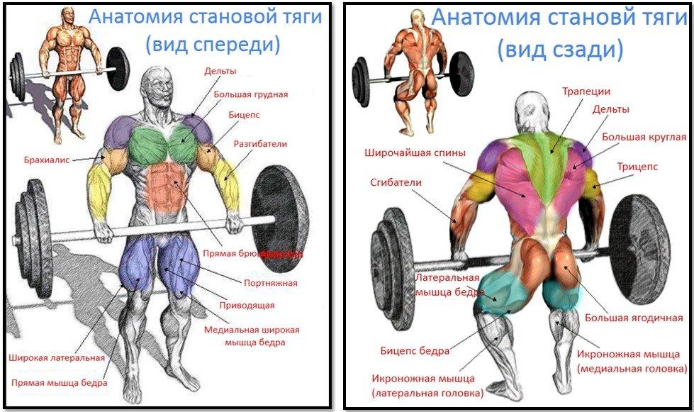 Становая тяга: виды становой, техника выполнения