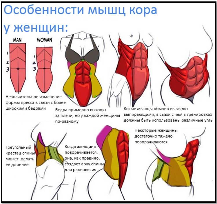 Мышцы кора: упражнения для его укрепления