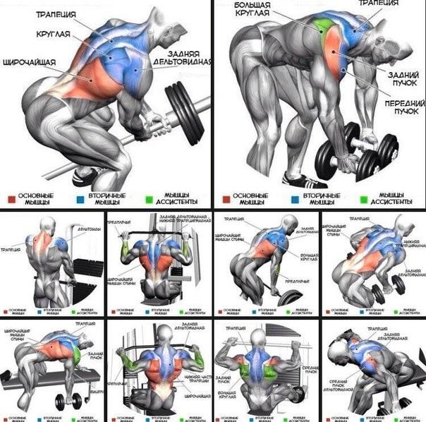 Упражнения для спины в тренажерном зале (в картинках) | фитнес