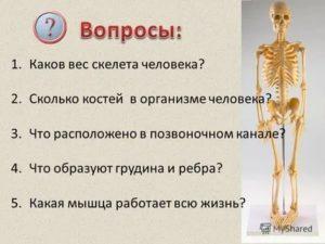 Тяжелая кость – правда или миф? | начни с тренировки | яндекс дзен