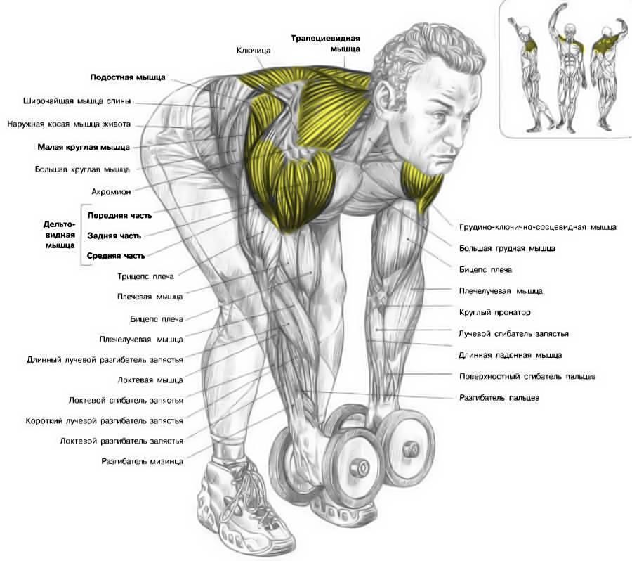 Упражнение для спины с гантелями для укрепления мышц для женщин и мужчин