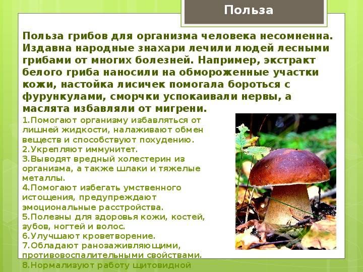 Время переваривания грибов в желудке человека таблица - про заболевания
