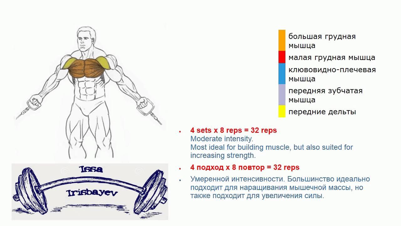 Сколько делать повторений на тренировке