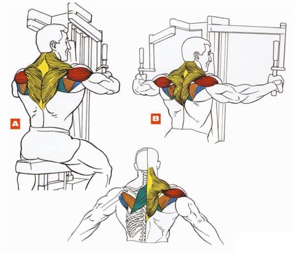 Как накачать средние и задние дельты? лучшие упражнения на плечи!
