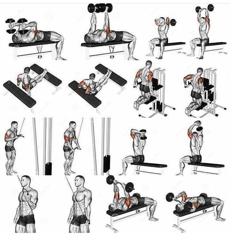 Упражнения на руки в тренажерном зале: техника, лучший комплекс на массу для мужчин и женщин