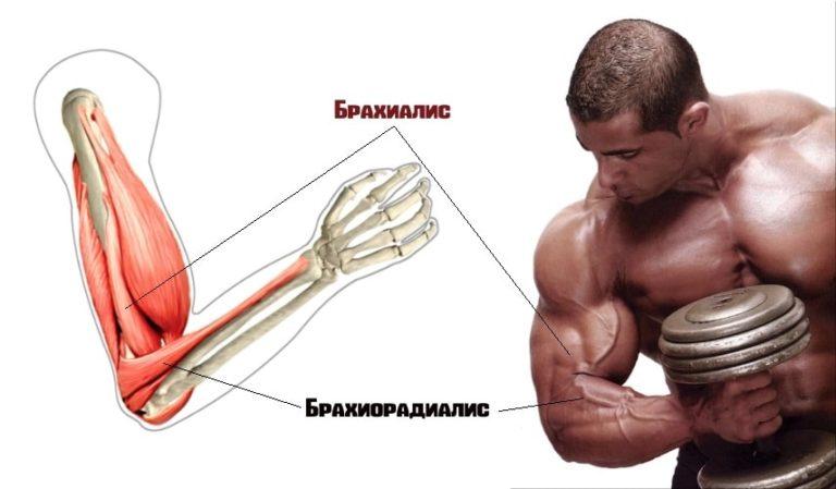 Упражнения на предплечья: подборка с гантелями, в тренажерном зале и в домашних условиях