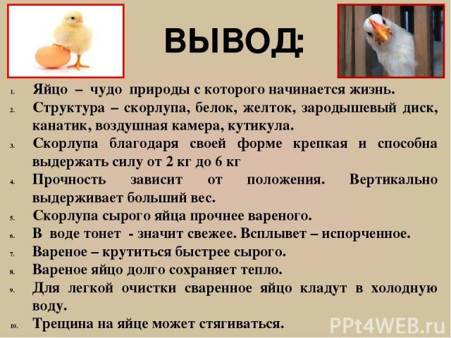 От чего зависит цвет скорлупы и желтка яиц у курицы - список влияющих факторов
