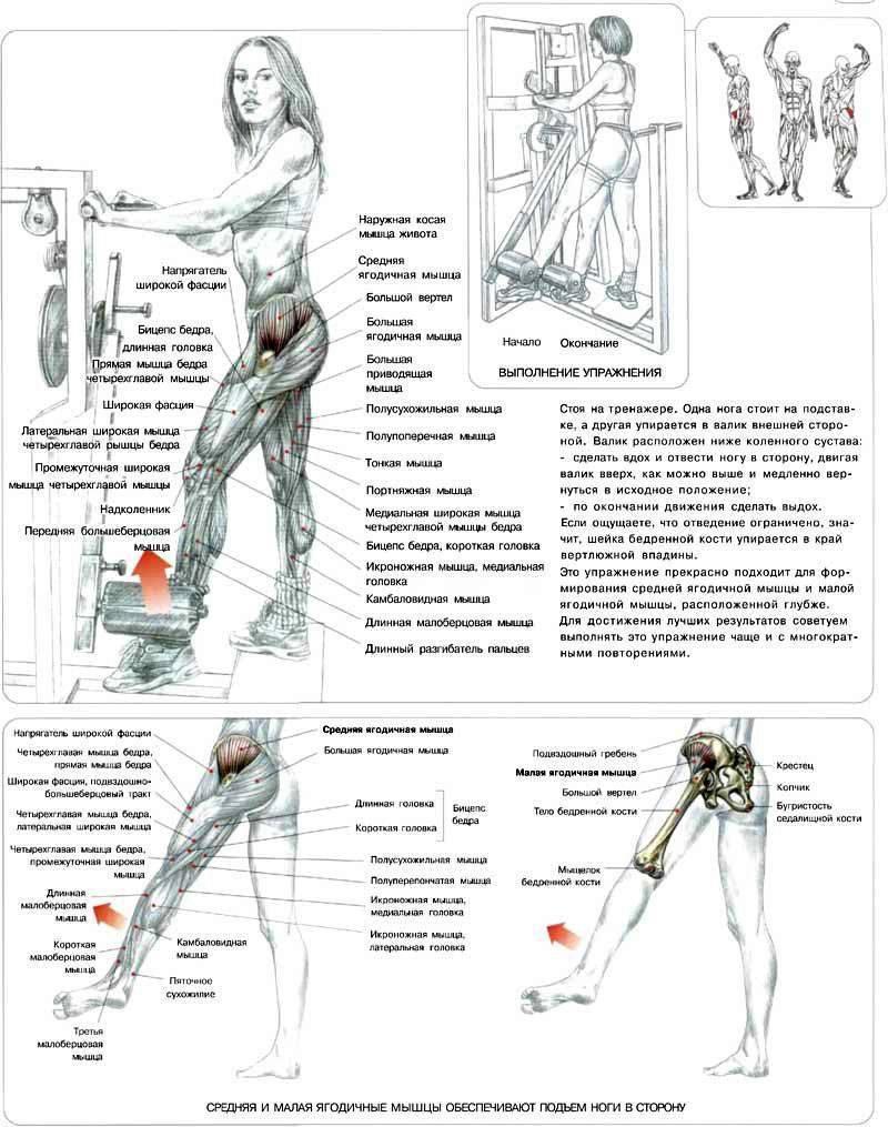 Тренировка для ног и ягодиц: программа для новичков (день 1)