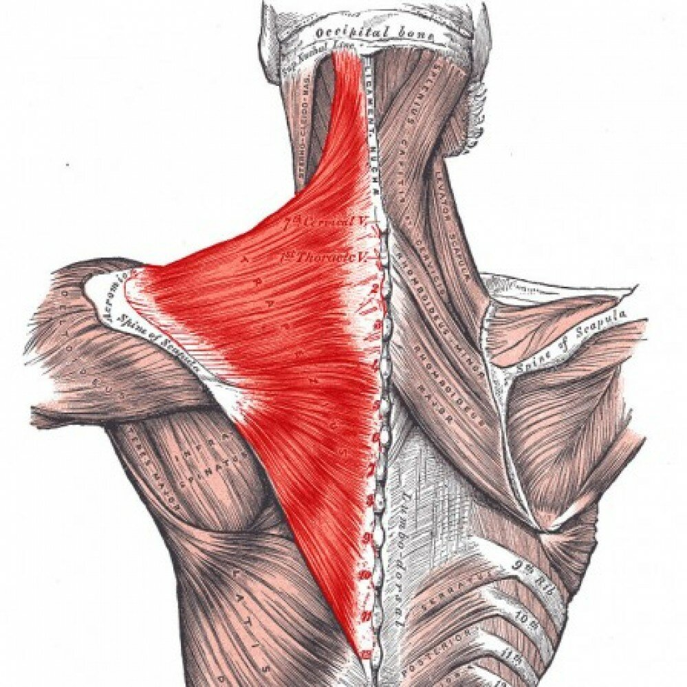 Тренировка шеи: как правильно накачать, а не навредить
