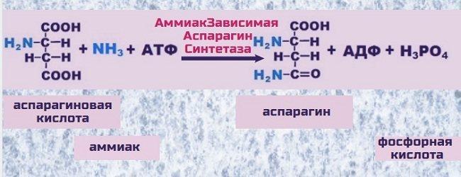Бустер тестостерона д-аспарагиновая кислота: отзывы врачей и учёных, как принимать, побочные эффекты | promusculus.ru