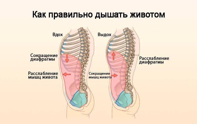 Диафрагмальное дыхание: техника упражнения, польза и вред дыхания животом, видео