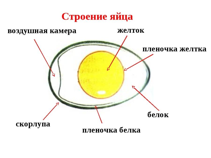 Что означают два желтка в одном яйце: приметы для мужчин и женщин