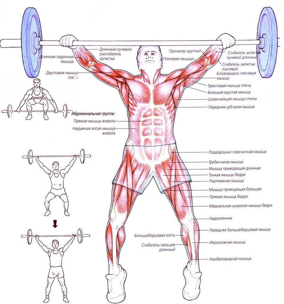 Рывок штанги — sportfito — сайт о спорте и здоровом образе жизни