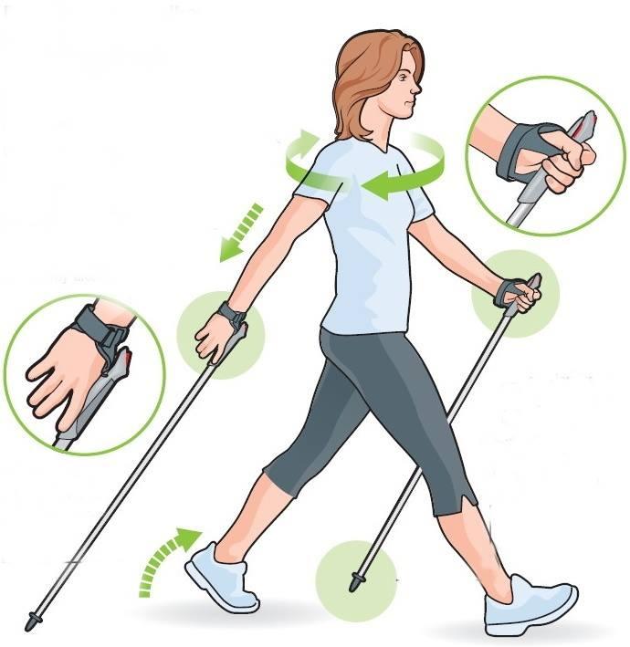 Скандинавская ходьба: пошаговая техника для начинающих