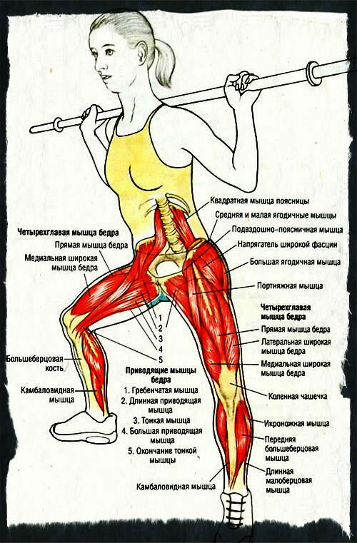 """Ягодичный мостик техника выполнения: какие мышцы работают, как правильно делать (10 вариантов исполнения позы) — """"fito"""" — красота и здоровье"""