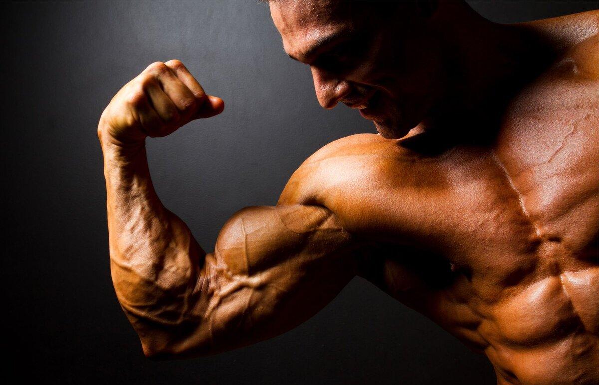 Как растут мышцы после тренировки?