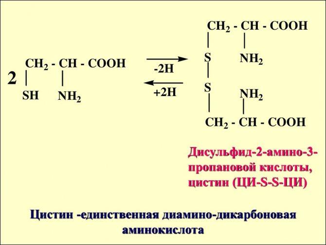 Как аминокислоты влияют на организм человека