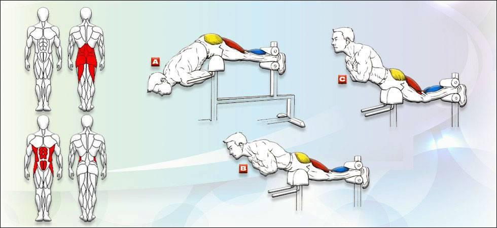 Обратная гиперэкстензия: техника выполнения в тренажере и в домашних условиях
