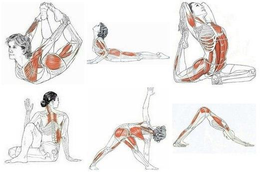 Тянем мышцы: как правильно делать растяжку