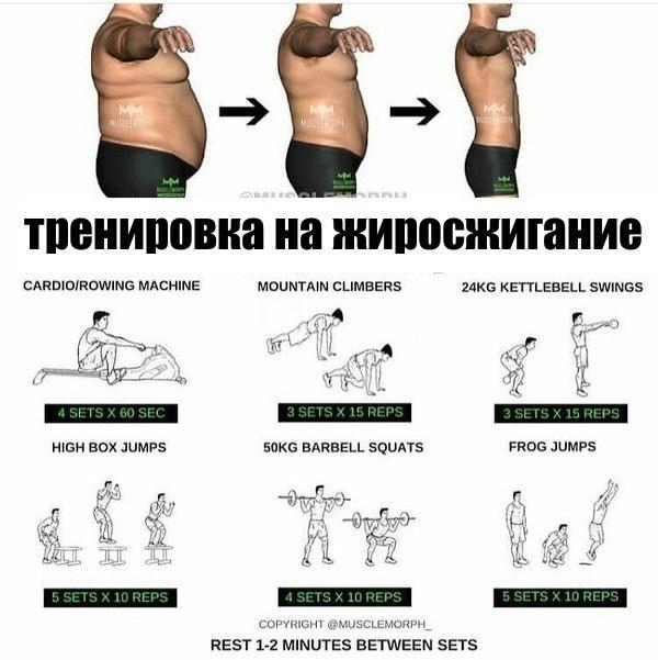 Как быстро сжечь жир на животе — гид по лучшим упражнениям